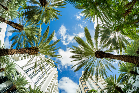 A stock photo of palm trees on Brickell Key in Downtown Miami, Florida.